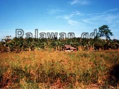 Landschaftsbild mit Naturhaus