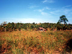 Bananenplantage auf Palawan