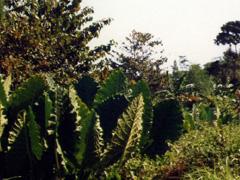 Große Pflanzen