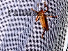 Käfer auf Palawan