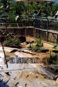 Krokodilfarm auf Palawan