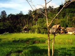 Naturhäuser neben einem Feld auf Palawan