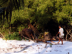 Schlitten der von Ochse gezogen wird auf Palawan